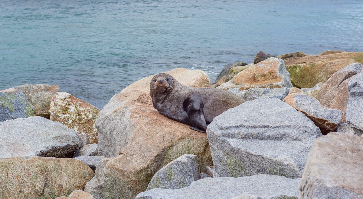 Narooma — океан, морские котики и звезды — годовщина жизни в Австралии