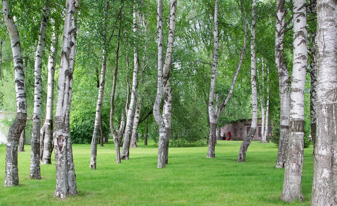 Каникулы в России — Итоги поездки
